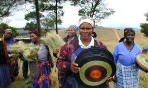 Korbflechterinnen, Kooperative Gone Rural, Swaziland/Afrika