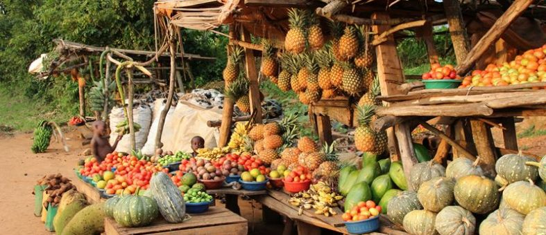 Frische Früchte aus Uganda